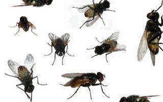 7 способов избавиться от мух