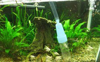 Как почистить аквариум своими руками