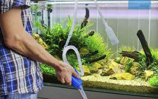 8 советов по очистке домашнего аквариума