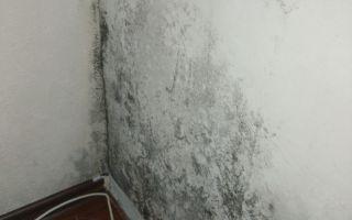Какими средствами можно удалить плесень и грибок со стен на кухне