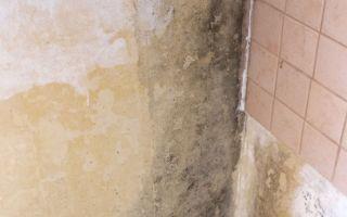 Какие средства помогут в борьбе с плесенью на кухне и в ванной