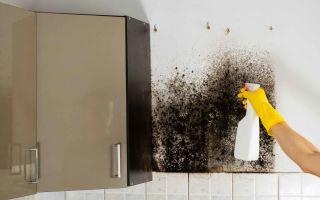 грибок и плесень на кухне — откуда берется и как бороться