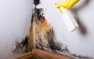 Как удалить плесневый грибок со стен навсегда