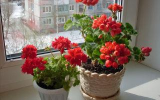 Какие растения полезны для здоровья жильцов квартиры