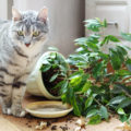 Как спасти цветы от кота: 5 лайфхаков