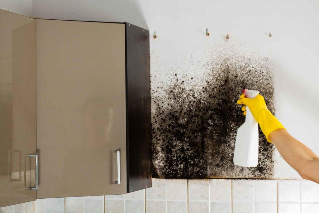 грибок и плесень на кухне - откуда берется и как бороться