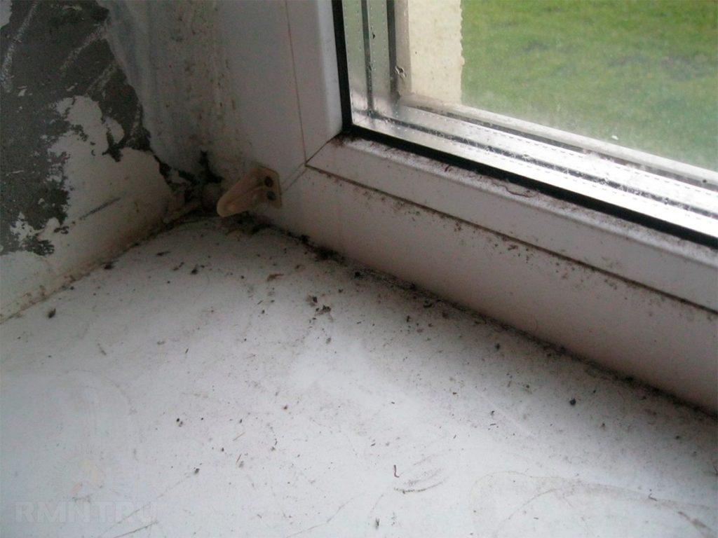 Конденсат и грибок: Почему потеют окна и как это исправить