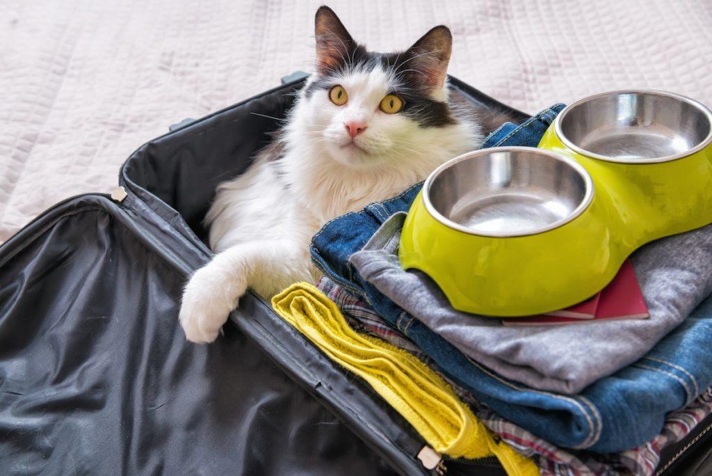 5 предметов, необходимых в квартире с пушистыми питомцами