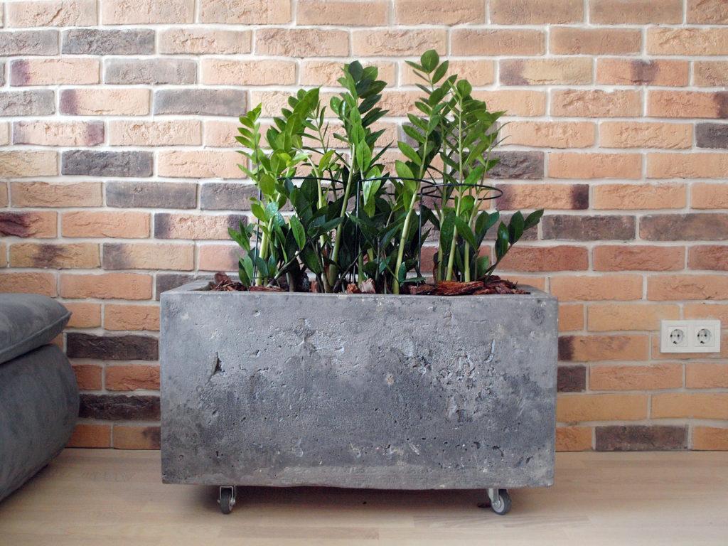 5 советов по выбору кашпо для больших растений