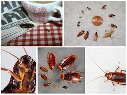 Как навсегда вывести тараканов своими силами