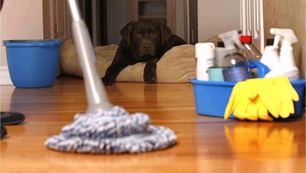 Какие домашние средства помогут убрать весь дом