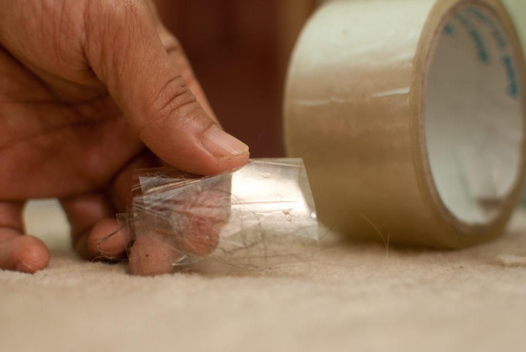 5 способов убрать шерсть домашних животных с мебели и ковров
