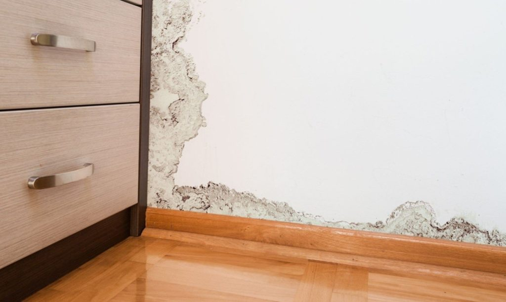Как можно быстро убрать запах сырости и плесени в квартире или доме