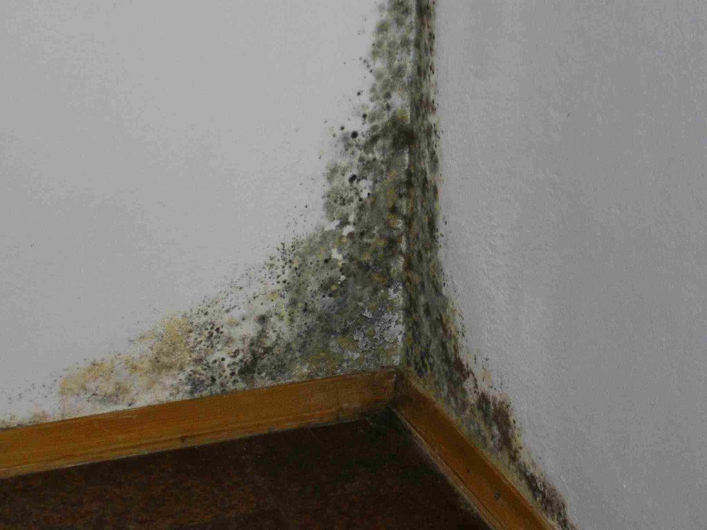 6 лучших  народных средств от плесени и грибка на стенах