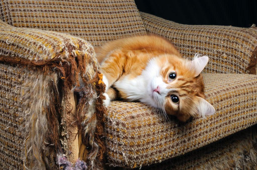 Как отучить кошку царапать обои и драть мебель