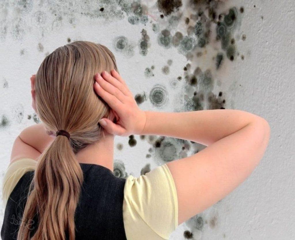Откуда появляется запах плесени в квартире и как от него избавиться