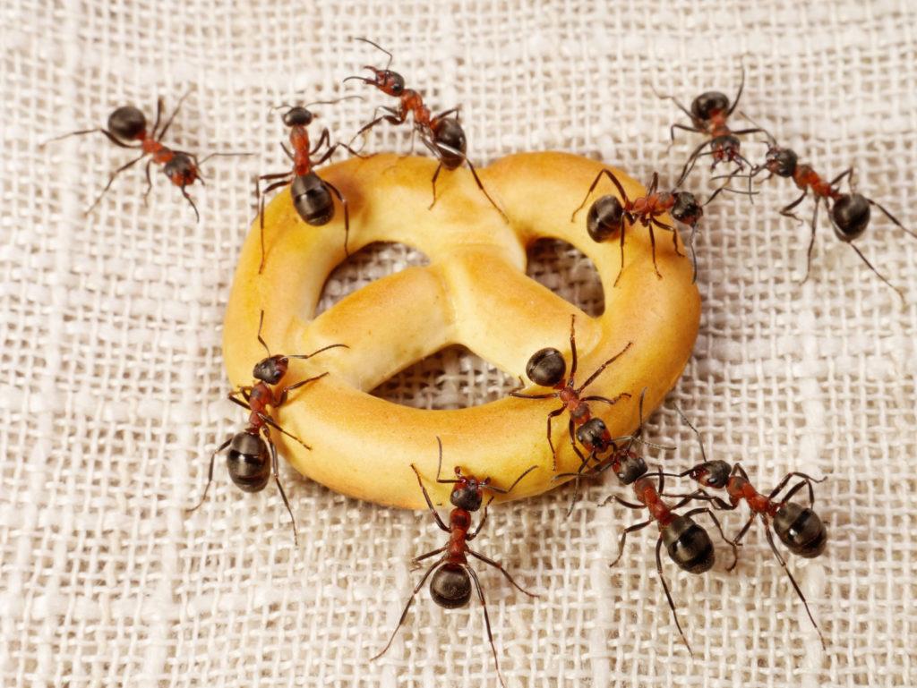 5 способов выведения муравьев из квартиры