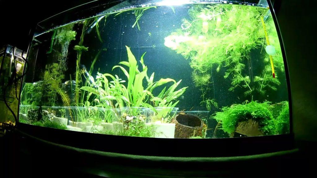 Как быстро помыть аквариум самостоятельно