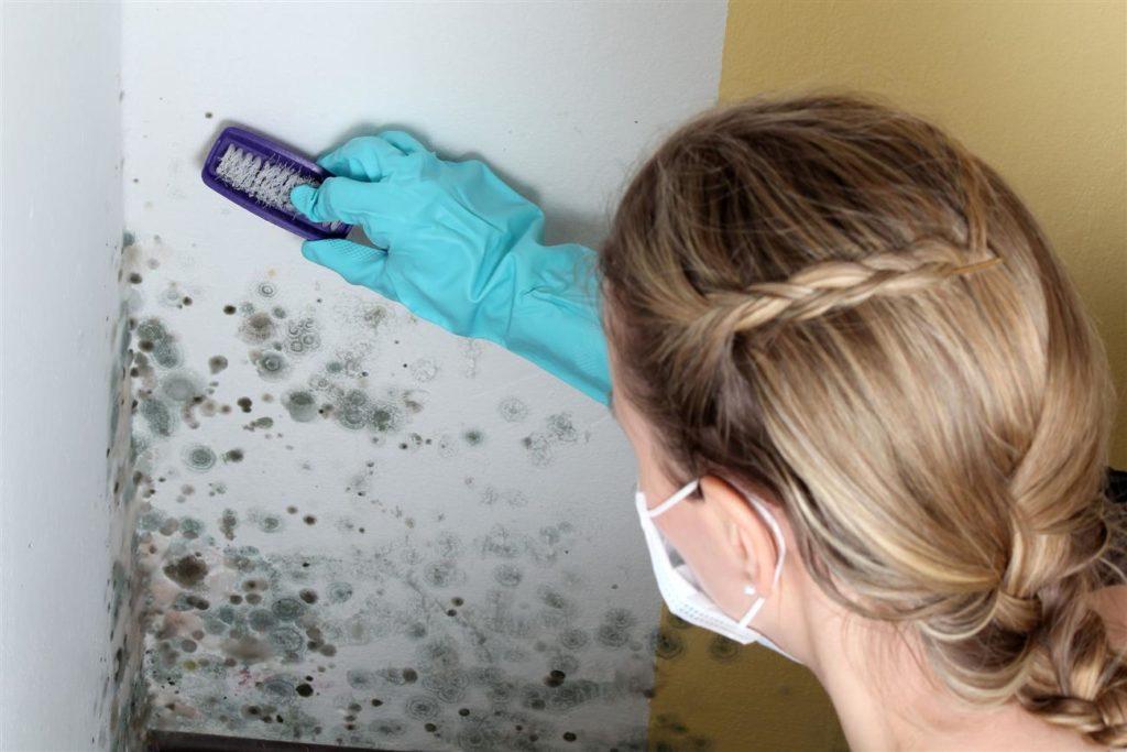 Откуда берется грибок на кухне и как его быстро вывести