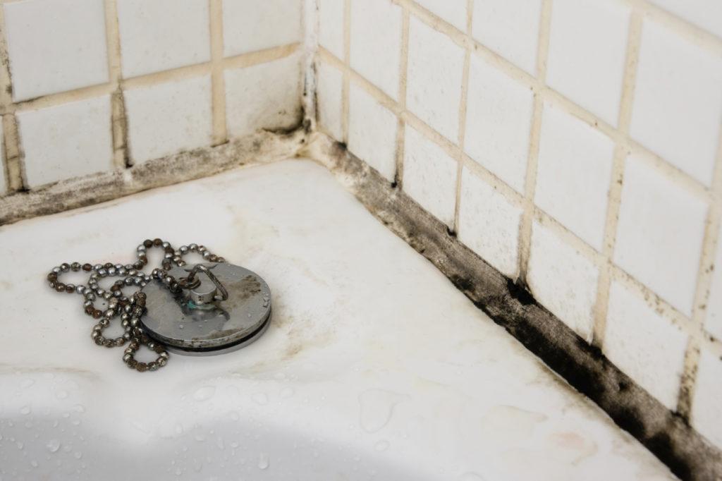 Избавляемся от плесени в ванной комнате: 9 проверенных советов