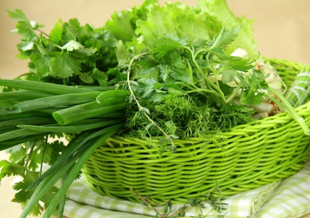 Как сохранить в холодильнике свежую зелень на зиму