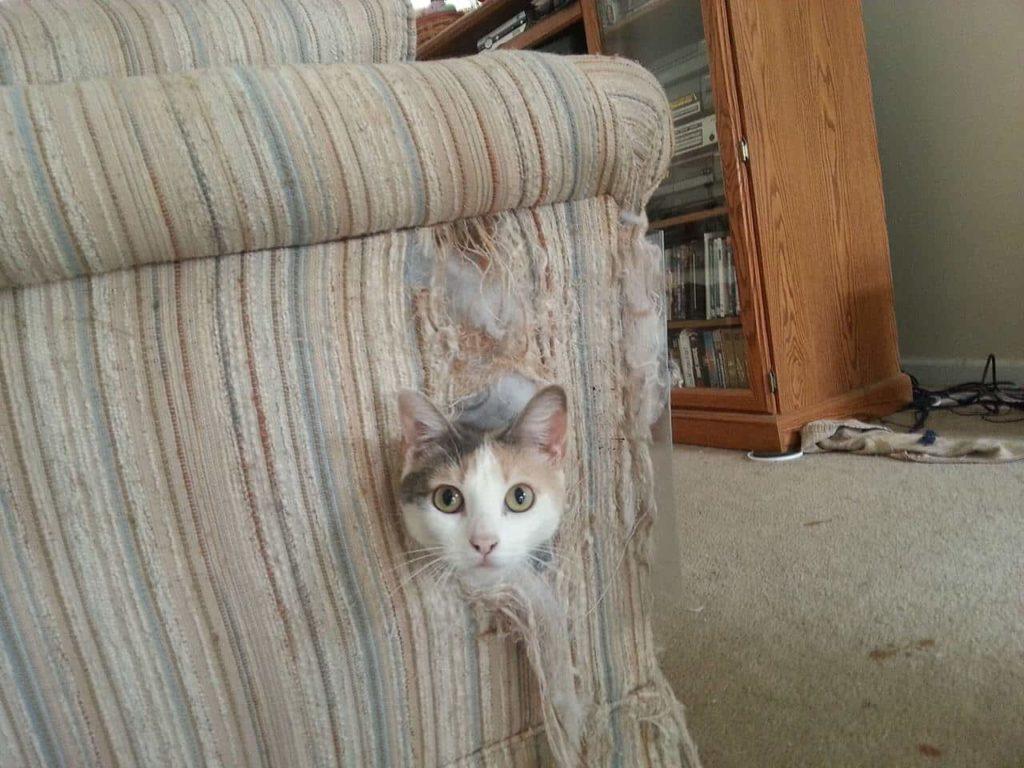 Что делать если кот дерет диван