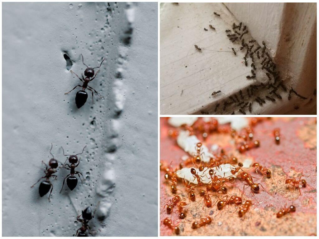 Маленькие муравьи - Большие проблемы, как избавиться ?