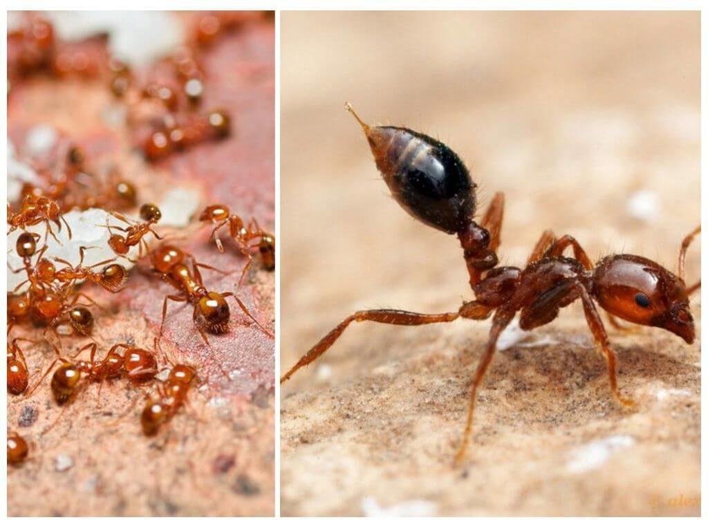 Что делать если на кухне появились муравьи
