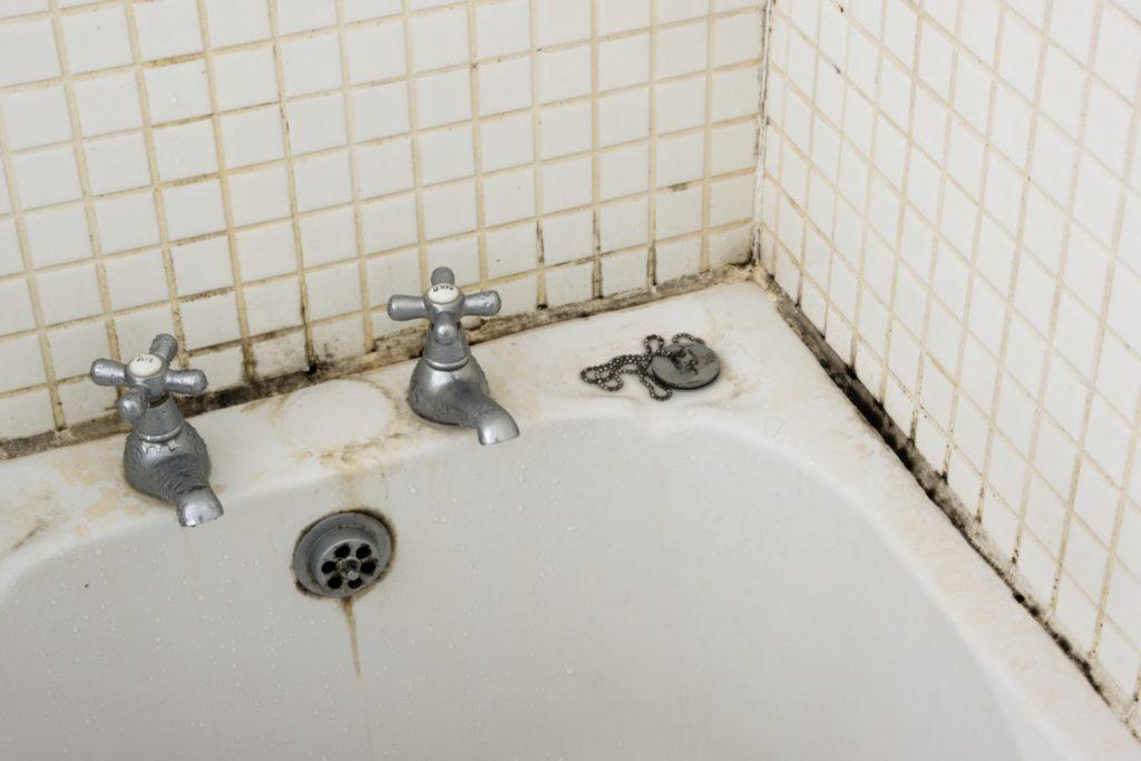 7 советов как удалить плесень и грибок в ванной комнате