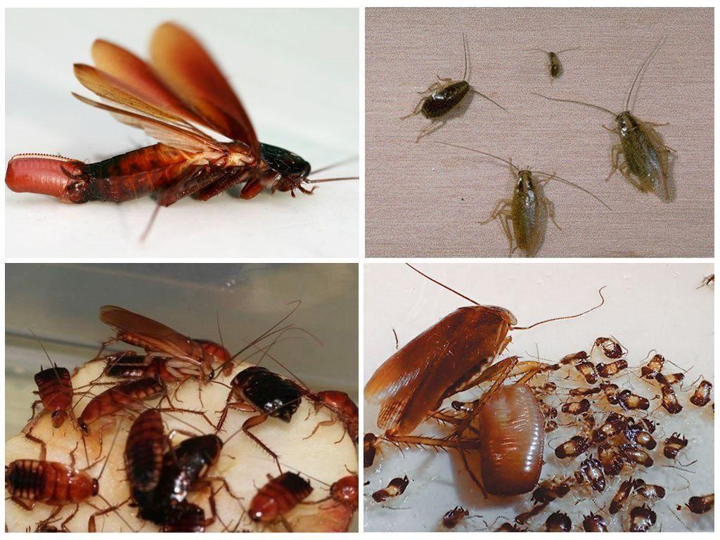 Как вывести тараканов раз и навсегда