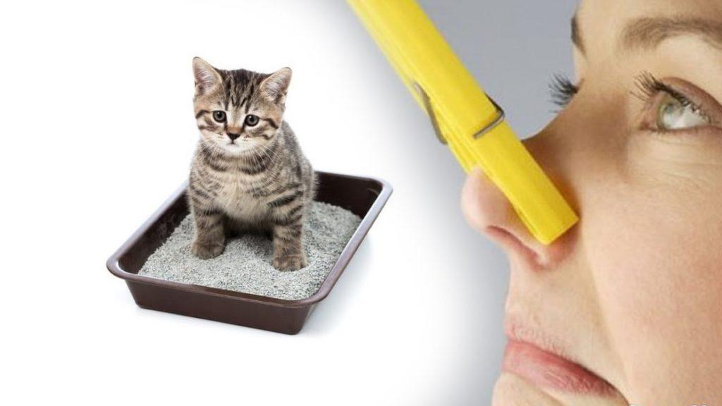 5 способов устранить неприятные запахи от животных