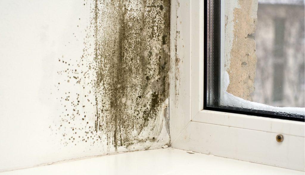 Какие угрозы может нести плесень в квартире