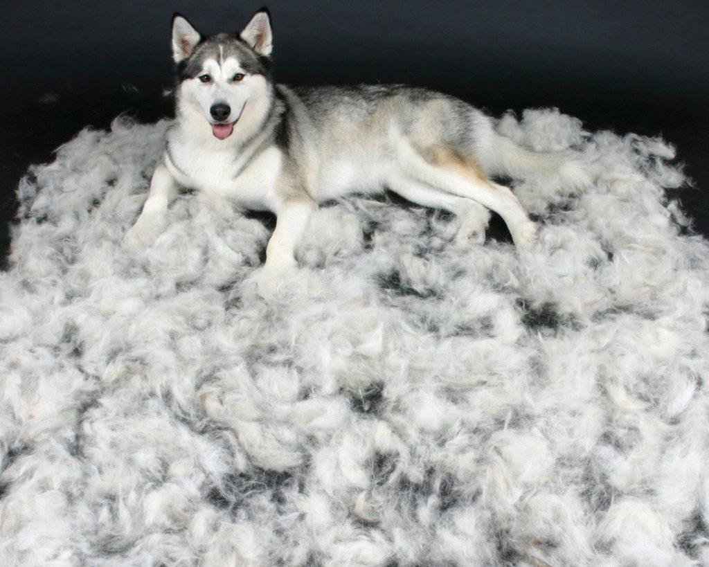 Как избавить свою квартиру от шерсти животных
