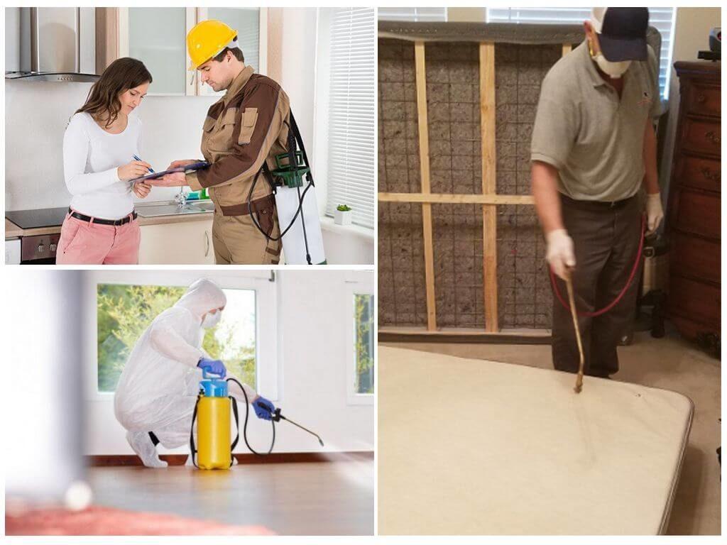 Как правильно убрать квартиру после профессиональной обработки от вредителей
